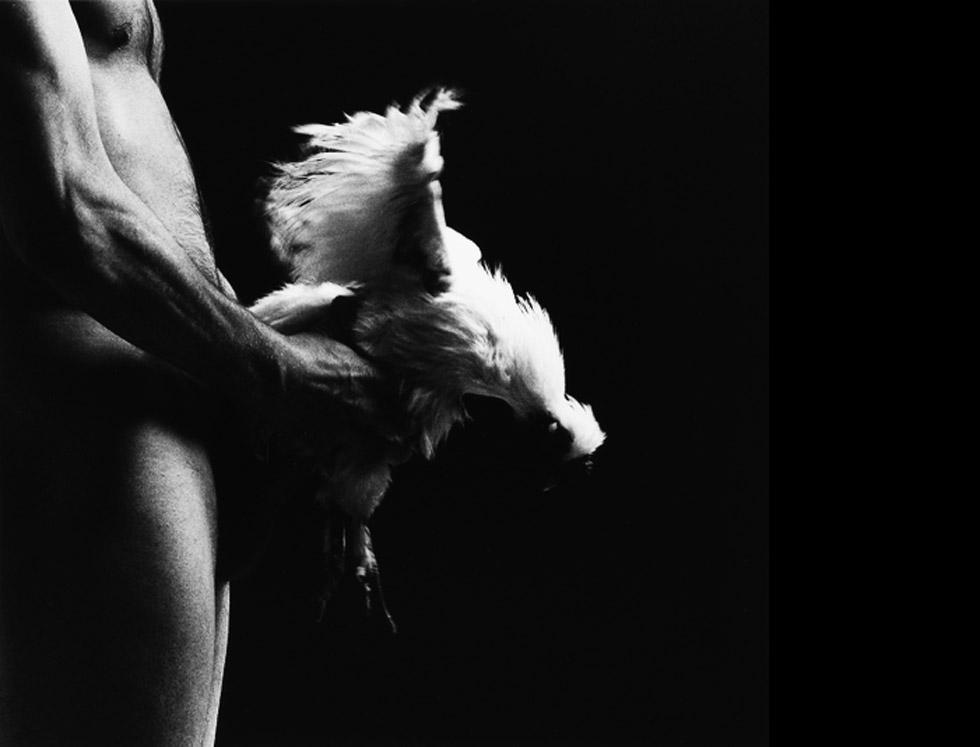 hombre follando gallina