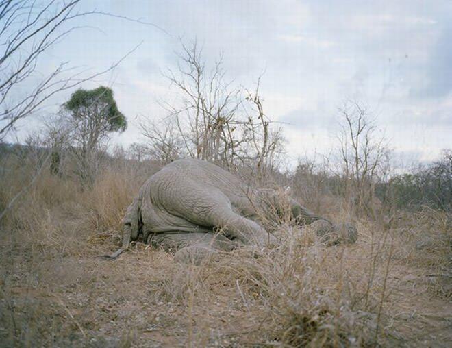 elefantez1