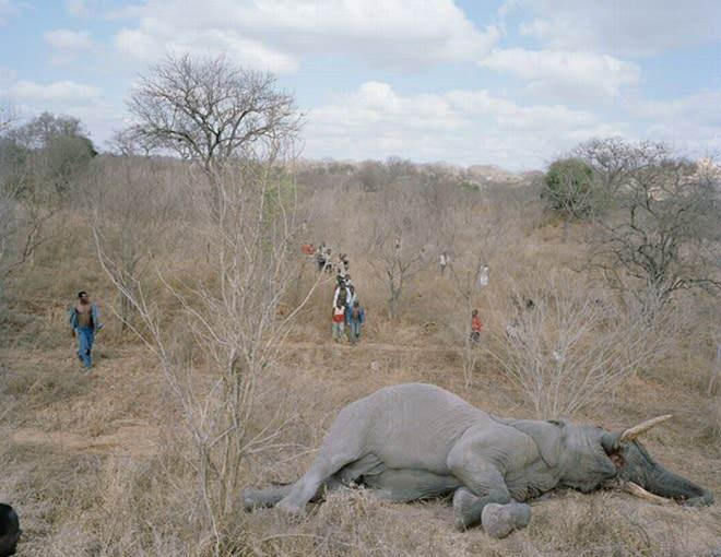 elefantez2