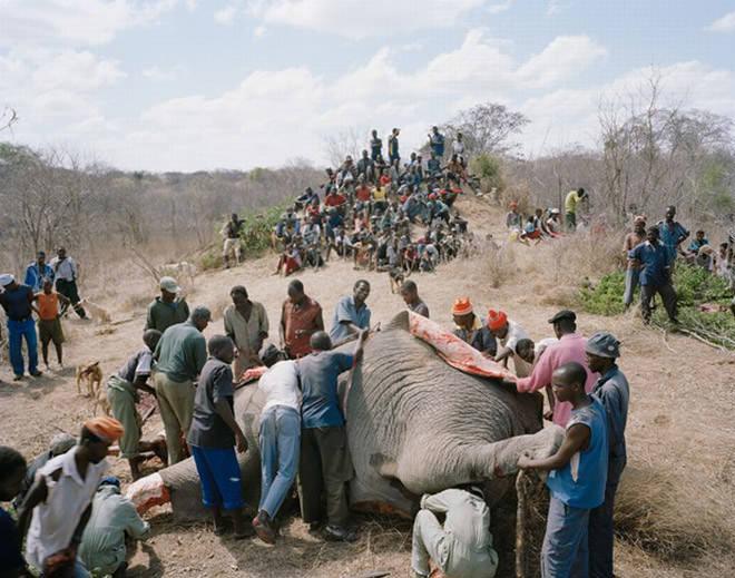 elefantez3